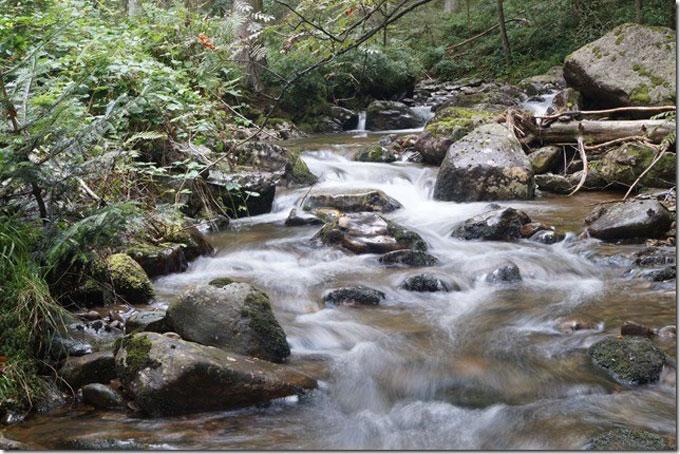 Waldspaziergang Moosbach
